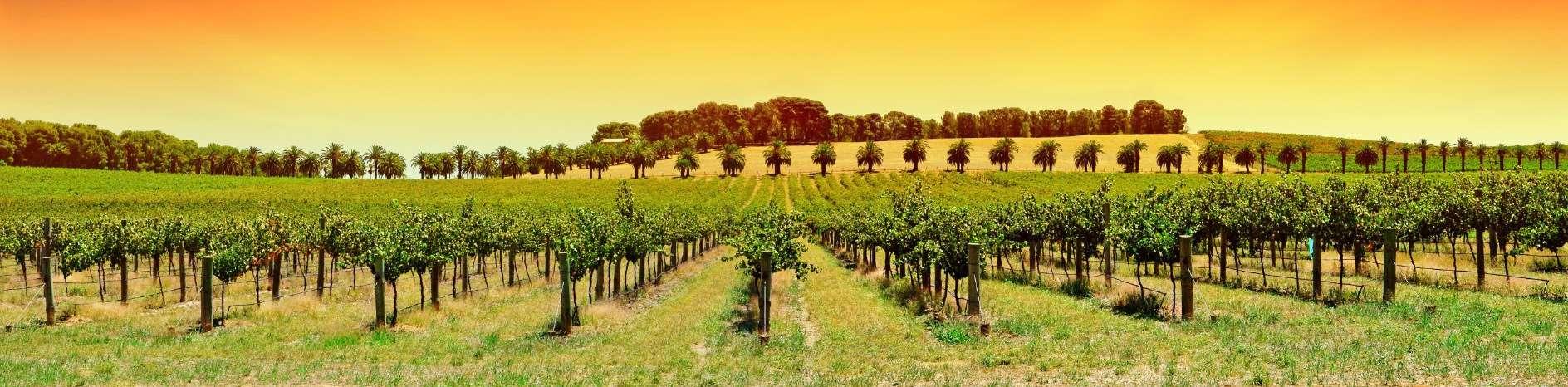 outsourcing vinicola